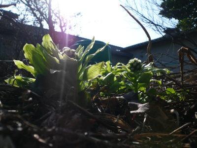 春っす!!